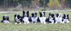 Hundegruppe