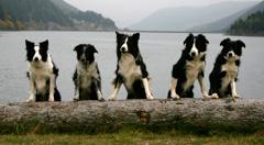 Tilly, Ziva, Scotty, Hermi, Tyra
